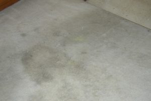Carpet Spot Removal Tips
